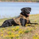 Vessels with vest detection dog